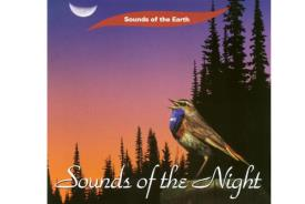 CD MUSICA | CD MUSICA SOUNDS OF THE NIGHT (PURE MUSIC NO VOICES OR MUSIC ADDED)